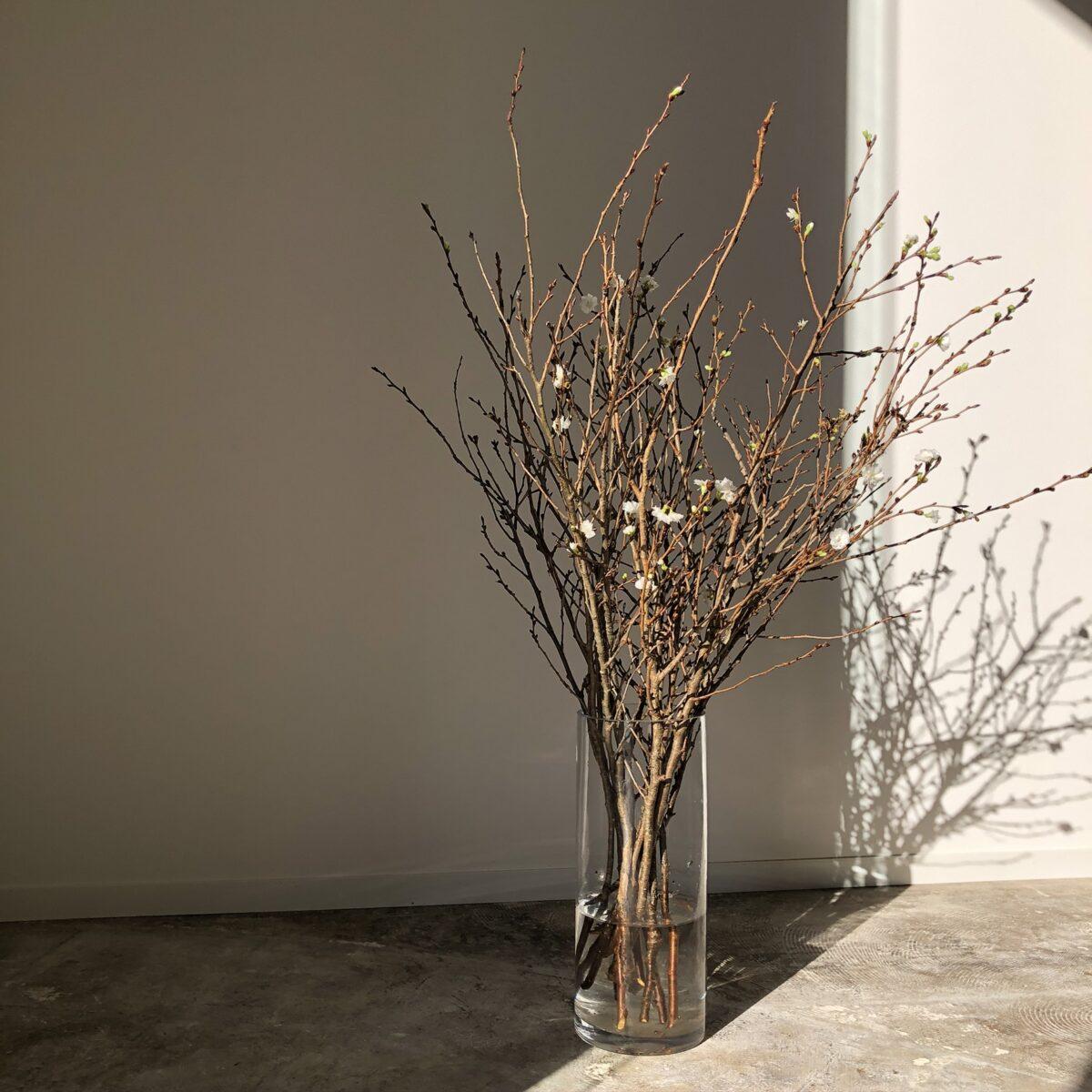 11月 季節の枝モノ