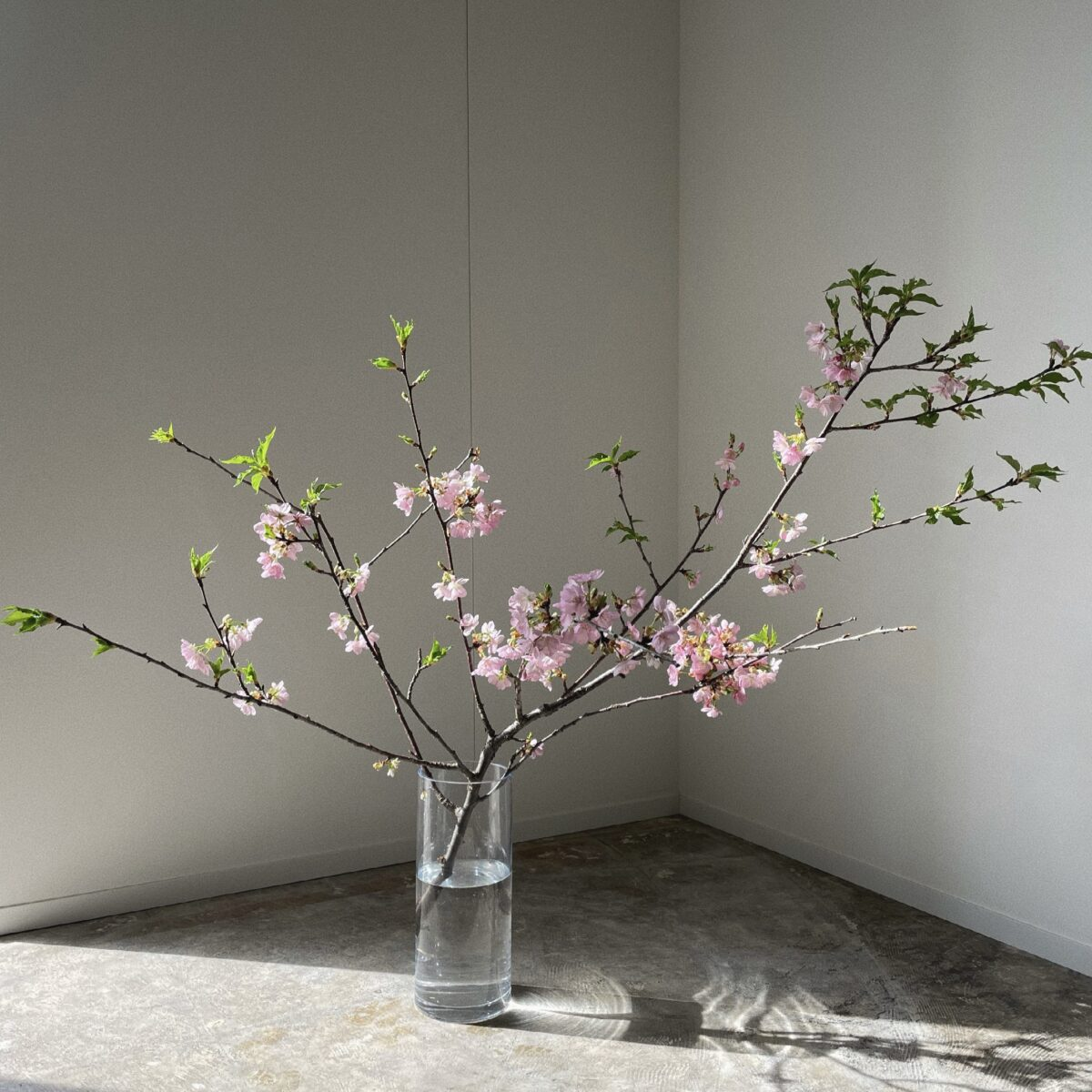 3月 季節の枝モノ