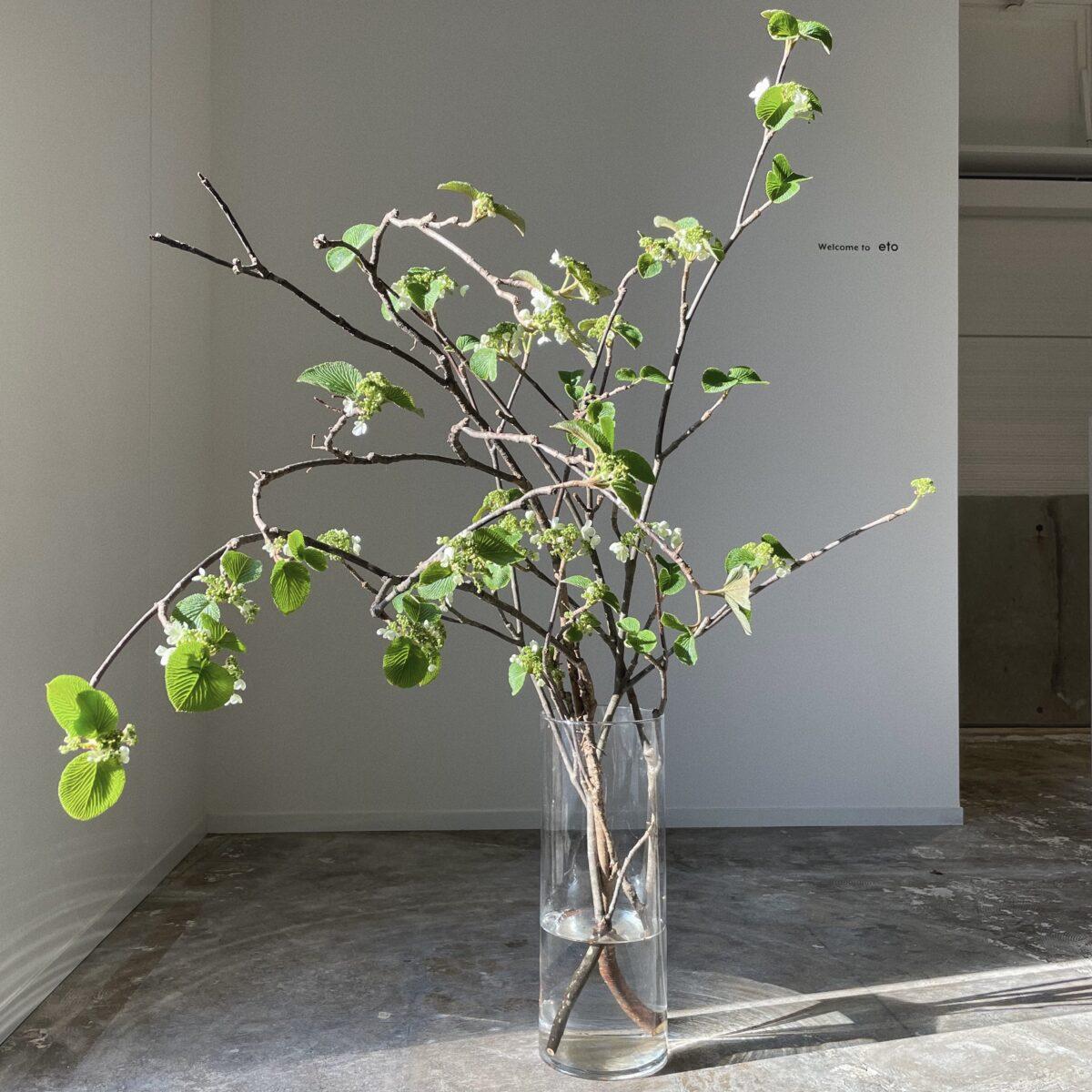 4月 季節の枝モノ